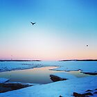 Crows Flying Over Frozen Ocean in Charlottetown PEI by Nadine Staaf