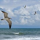 As The Birds Fly by Kathy Baccari