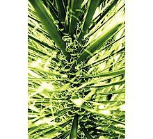 Palm Tree Tesla Photographic Print