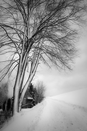 winter tree by Dorit Fuhg