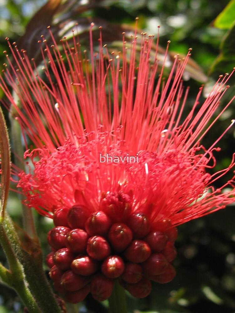 Prickly and Precious by bhavini