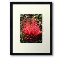 Prickly and Precious Framed Print