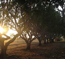 The Rising Sun by bhavini