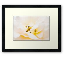 Marshmallow Framed Print