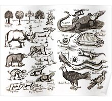 Medieval Animals Chart Poster