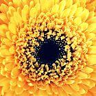 Yellow Gerbera by Karen Tregoning