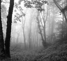 Trees in the Mist - Mono by Tracy Friesen