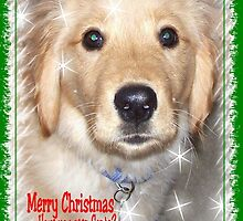 Golden Retriever Christmas Card ~ Have You Seen Santa? by Marie Sharp