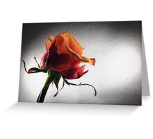 Rose Effects Greeting Card