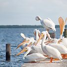 Sitting on the Dock by Michael  Dreese