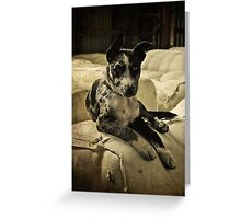 King Of The Shed Greeting Card