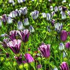 SpringFlowers_5672 by sasakistudio