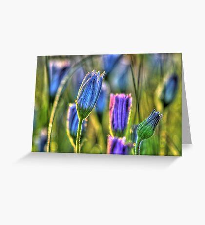 SpringFlowers_5875 Greeting Card