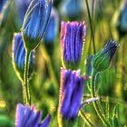 SpringFlowers_5878 by sasakistudio