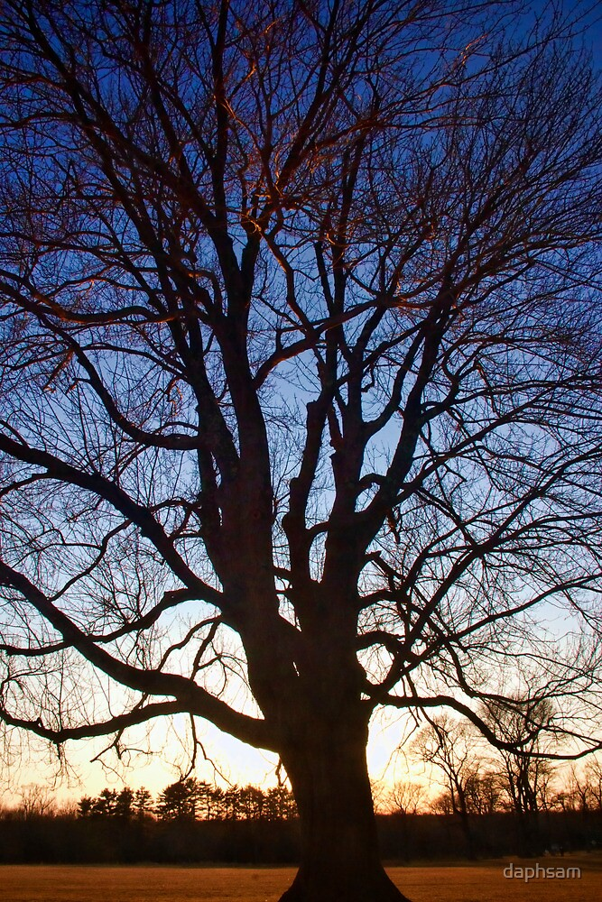 Tree Of Life by daphsam