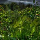 SpringFlowers_5488 by sasakistudio