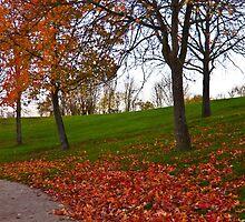 Autumn by Mathieu Longvert