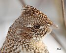 Portrait of A Grouse by Todd Weeks