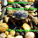 Congratulations…Mother Nature's Finest TOP 10 Challenge Winner by AndreaEL