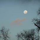 Moon trees by JudyDarcy