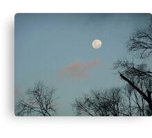 Moon trees Canvas Print