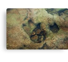 Dinosaur Tracks in the River Canvas Print