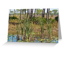 Tall Grass in the Swamp Greeting Card