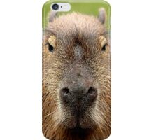 Portrait of a rather handsome capybara iPhone Case/Skin