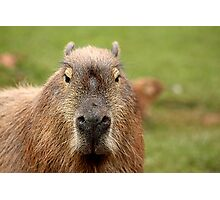 Portrait of a rather handsome capybara Photographic Print