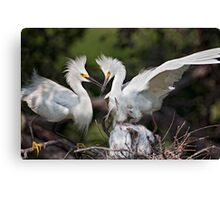 Snowy Egret Family Canvas Print