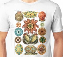 Assorted Sea Urchins Unisex T-Shirt