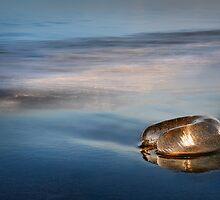 Morning Glow by shuttersuze75