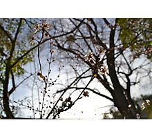 Blossoms in the Bay Photographic Print