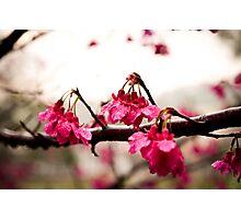 Good Morning Spring Photographic Print