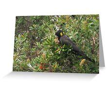 Black Cockatoo Greeting Card