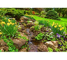 The Little Creek in the Garden - Impressions Of Spring Photographic Print