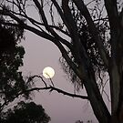 April Moon by JudyDarcy