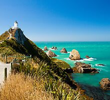 Nugget Point by Martin Canning