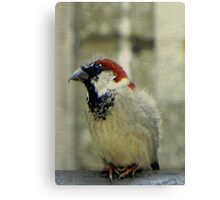 I pose for seeds!!! © Canvas Print