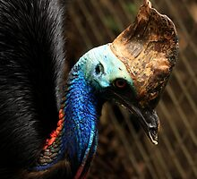 Colourful Cassowary by Sea-Change