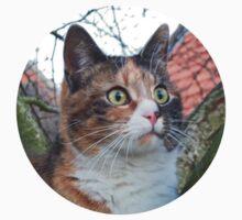 Calico Cat by Titia Geertman