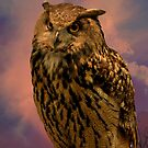 Owl by browncardinal8