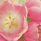 Tulips by Anne Staub