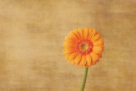 Orange by Anne Staub