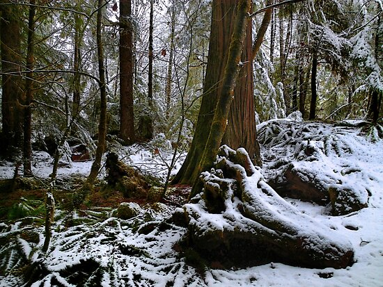 Under The Trees by Charles & Patricia   Harkins ~ Picture Oregon