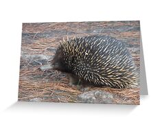 Echidna up close and personal. Greeting Card