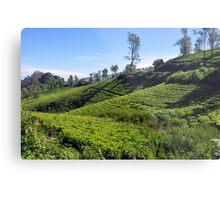 Tea Garden Metal Print
