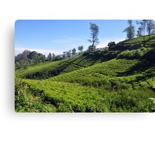 Tea Garden Canvas Print