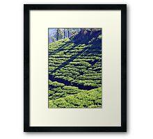 Tea Garden Framed Print