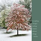 Snowy Maple Tree With Buddha Quote by Heidi Hermes